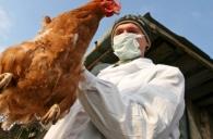 Інформація щодо зареєстрованого випадку захворювання на грип птиці! захворювання на грип птиці!