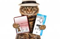 До уваги власників братів наших менших: змінено правила супроводження домашніх тварин ветеринарно-санітарним паспортом!