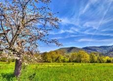 Прогноз фітосанітарного стану та рекомендації щодо захисту сільськогосподарських рослин у господарствах Вінницької області в травні 2018 року
