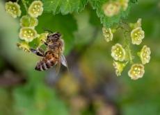 Діалог між пасічниками та аграріями - запорука ефективного розвитку галузі бджільництва!
