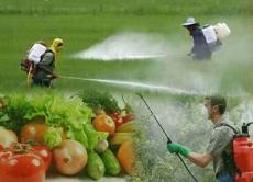 Пам'ятка населенню: Правила поведінки і дії при загрозі отруєння агрохімікатами