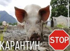Інформація щодо спалаху АЧС у смт. Залізничне Козятинського району