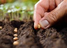 Пам'ятка для споживачів при придбанні насіння овочевих та баштанних культур, кормових коренеплодів і садивного матеріалу багаторічних рослин