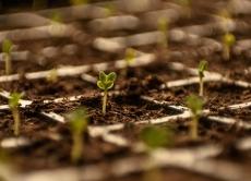 Визначення посівних якостей насіння cтаном на 18 грудня 2019 року