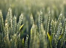 Визначення посівних якостей насіння станом на 20 листопада 2019 року