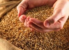 Інформація щодо продажу зерна