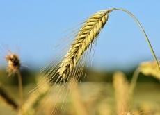 Визначення посівних якостей насіння cтаном на 28 серпня 2019 року