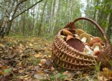 На Вінниччині зафіксовано чотири нових випадки отруєння грибами