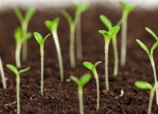 Показники посівних якостей насіння