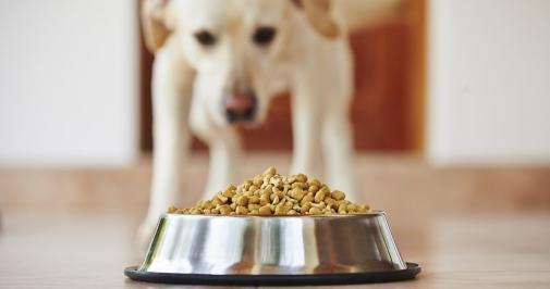 На український ринок можливе потрапляння корму для собак з високим вмістом вітамину D