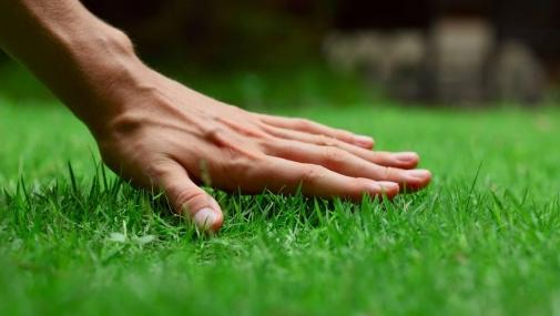 Газонна трава: яку вибрати та як правильно посіяти?