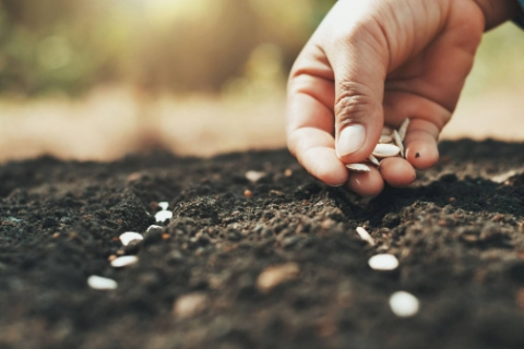Визначення посівних якостей насіння станом на 12 листопада 2020 року