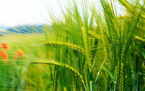 До відома сільгоспвиробників та експортерів сільськогосподарської продукції!