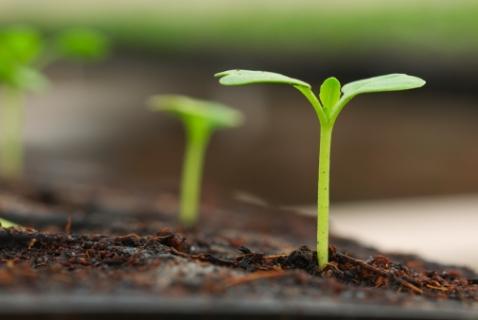 Визначення посівних якостей насіння станом на 13 березня 2019 року
