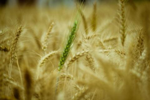 Визначення посівних якостей насіння станом на 13 серпня 2020 року