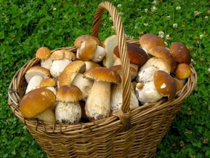 Держпродспоживслужба застерегає - отруєння грибами смертельно небезпечне!