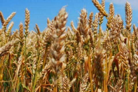 Визначення посівних якостей насіння станом на 23 липня 2020 року
