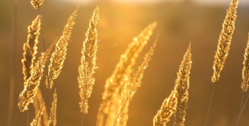 Визначення посівних якостей насіння станом на 02 жовтня 2019 року