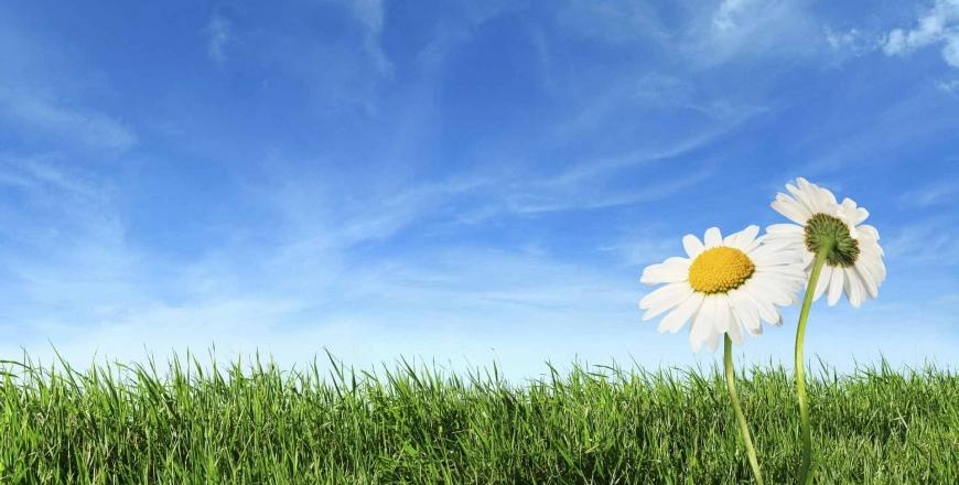 Прогноз фітосанітарного стану та рекомендації щодо захисту сільськогосподарських рослин в господарствах області в травні 2019 року