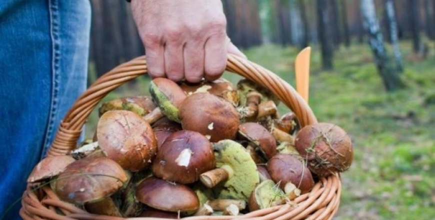 Увага - зареєстровано чергове отруєння грибами!