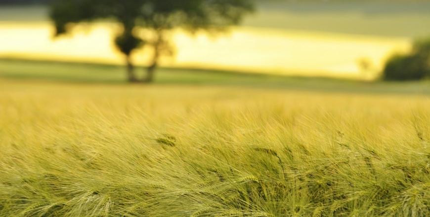 Прогноз фітосанітарного стану та рекомендації щодо захисту сільськогосподарських рослин у господарствах Вінницької області в червні 2018 року