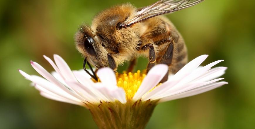 Щодо попередження отруєння медоносних бджіл!
