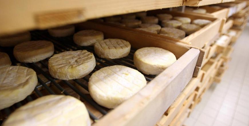 Увага: виявлено небезпечний сир, що експортується з Франції!