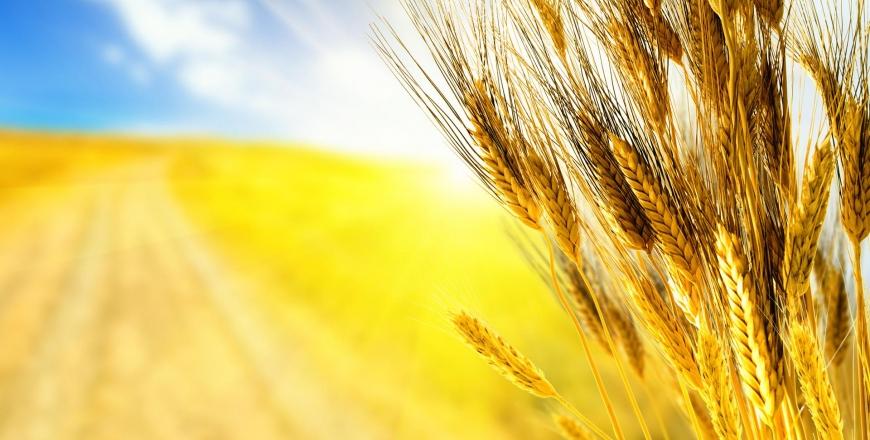 УЗА запрошує на безкоштовні семінари щодо вимог системи НАССР, які відбудуться у 7 містах України