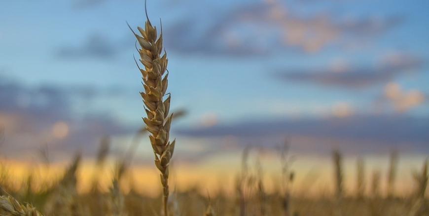 Визначення посівних якостей насіння станом на 18 вересня 2019 року