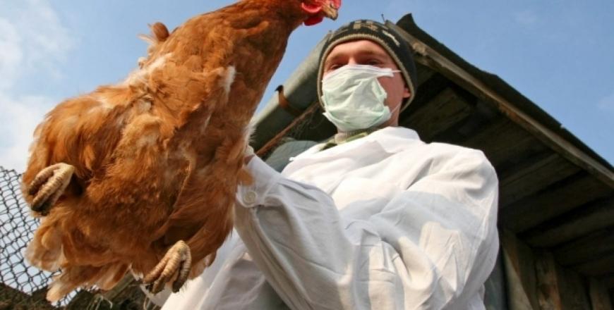 Інформація щодо зареєстрованого випадку захворювання на грип птиці!