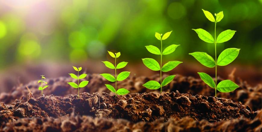 Визначення посівних якостей насіння станом на 20 березня 2019 року
