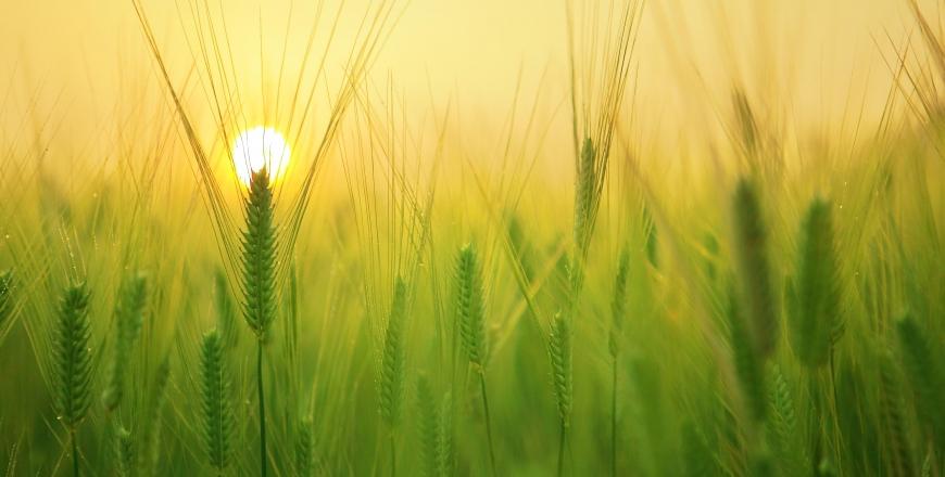 Визначення посівних якостей насіння станом на 23 жовтня 2019 року