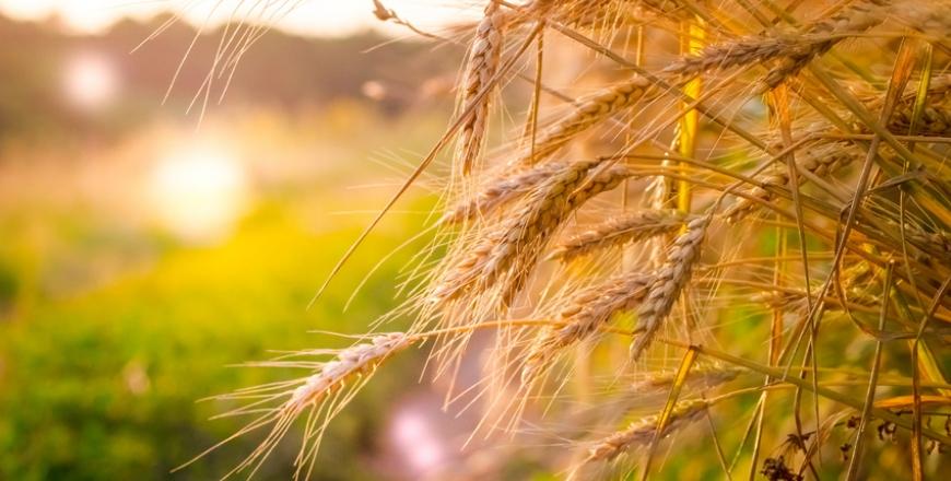 Визначення посівних якостей насіння станом на 25 вересня 2019 року