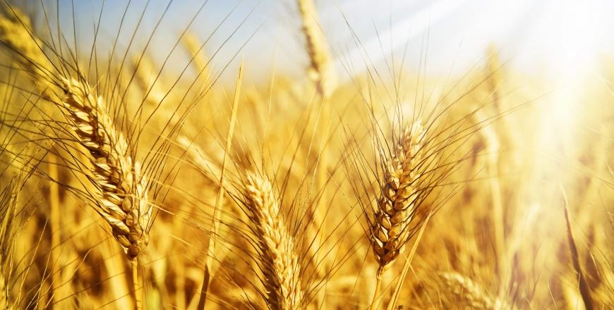 Встановлені норми природних втрат зерна при зберіганні на складах