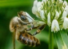 Основні правила використання пестицидів та методи запобігання отруєнню бджіл