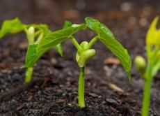 Визначення посівних якостей насіння станом на 12 березня 2020 року