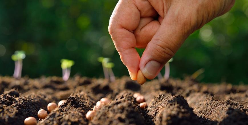 Визначення посівних якостей насіння станом на 13 лютого 2020 року